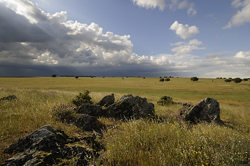 Extremadura, holiday, birds, birding, Monfragüe, National Park, steppe near Caceres